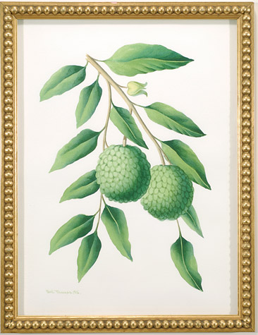 Watercolor of Lychees