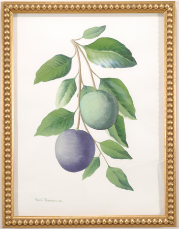 Watercolor of Plums